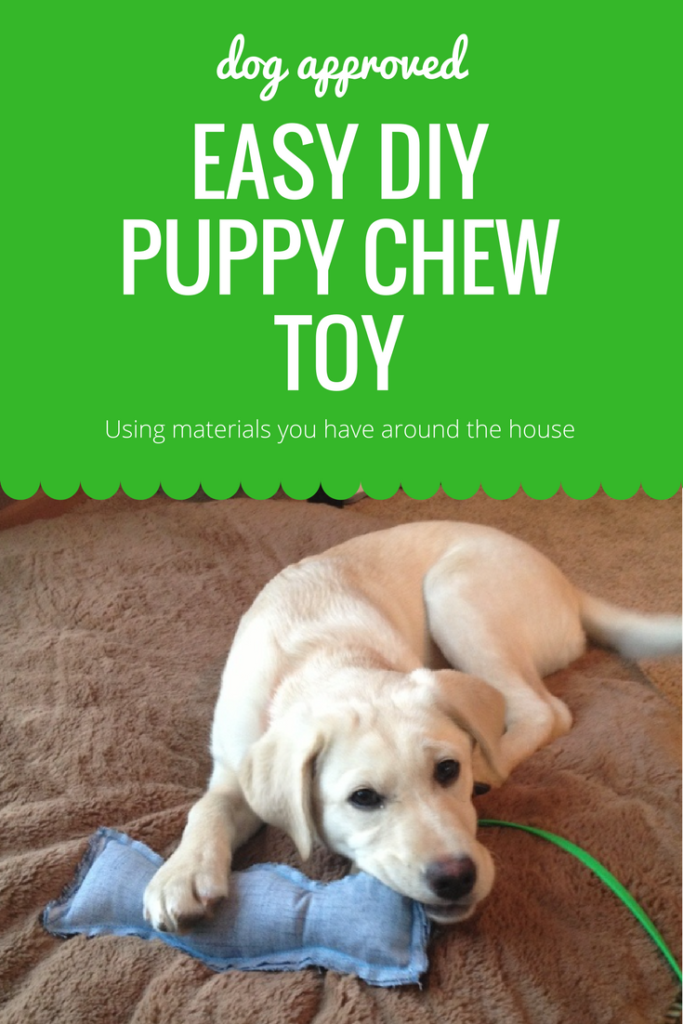 dog approved DIY puppy chew toy