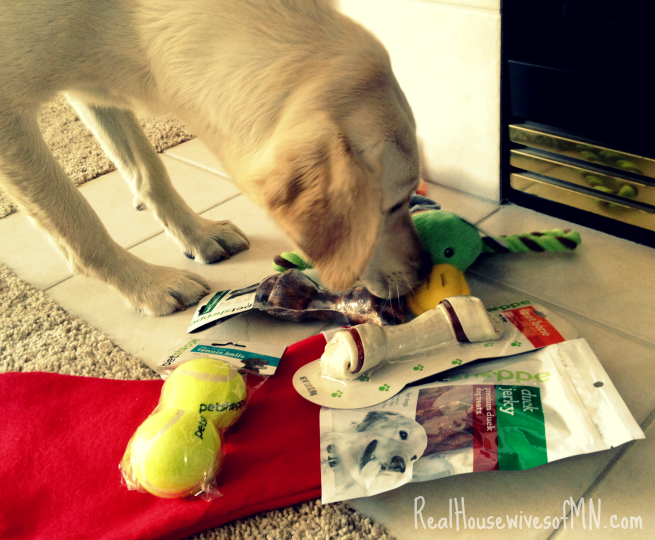 walgreens pet toys and gifts #shop