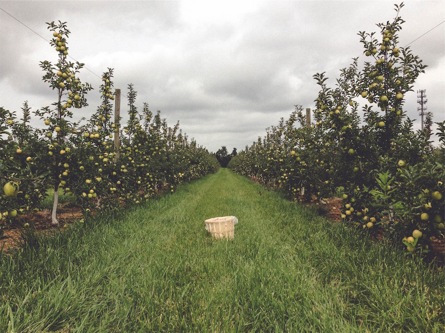 Apple orchards minnesota
