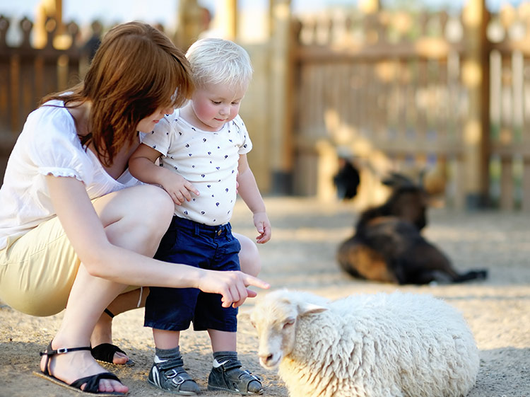 Twin Cities Spring Baby Animals Festival 2018 Real